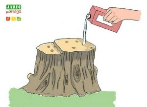 détruire souche arbre