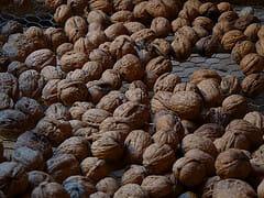 Le séchage des noix