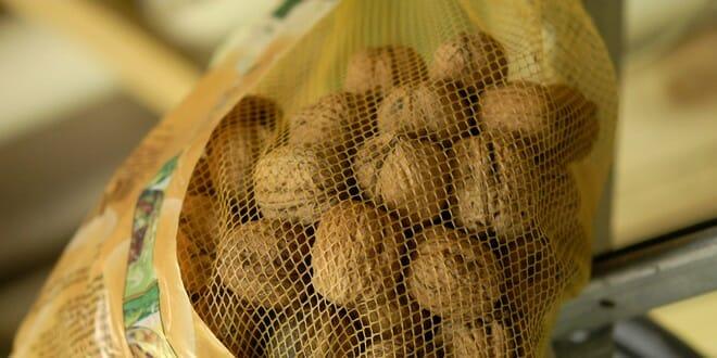 sécher les noix