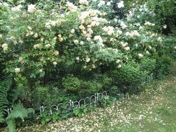 A la rencontre de Chantal Keraudren et de son jardin de l'Echassière