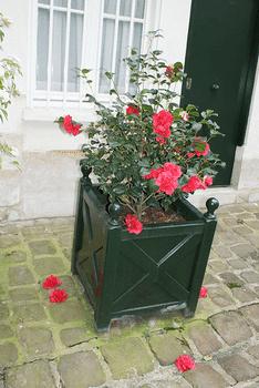Planter un cam lia rose jardipartage - Ou planter un laurier rose ...