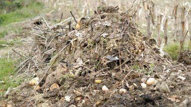 Faire du compost facilement