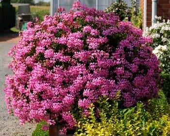 Jardinière de fleurs
