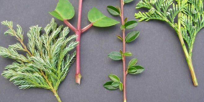 Liste des plantes à bouturer en été | Jardipartage