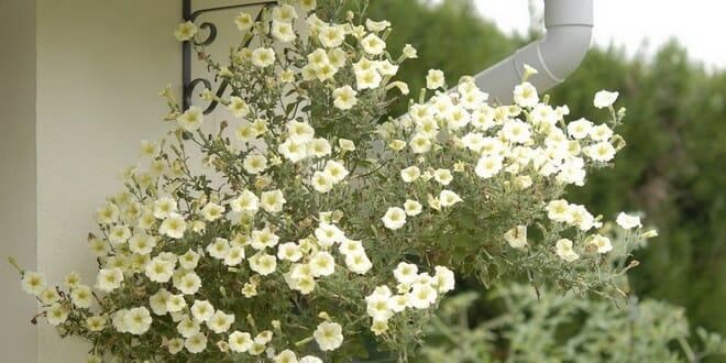 Potées fleuries: 3 gestes à effectuer en fin d'été pour prolonger la floraison.