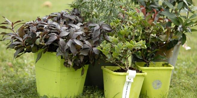 5 arbustes pour composer une haie basse fleurie