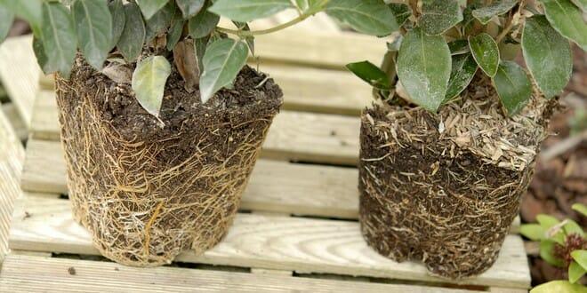 Quelques points à vérifier avant l'achat d'une plante en conteneur