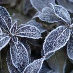 Comment protéger les plantes du gel