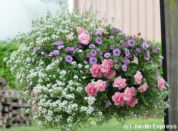 4 compositions pour une jardini re fleurie l t prochain for Composition jardiniere exterieure
