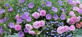 4 compositions pour une jardinière fleurie l'été prochain !