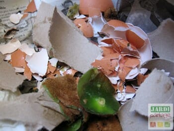 compostage cuisine