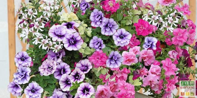 5 compositions pour une jardini re fleurie l 39 t prochain - Fleurs pour jardiniere plein soleil ...