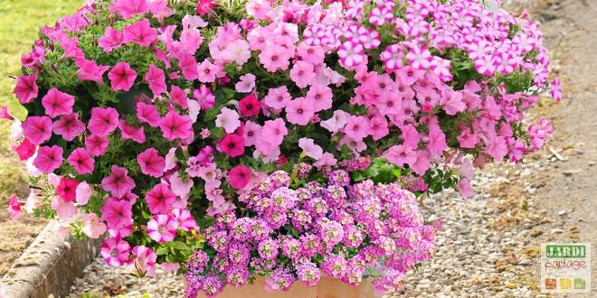 compositions pour une jardinière fleurie l'été prochain ...