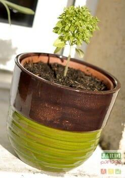cultiver du basilic en pot sur le rebord de la cuisine