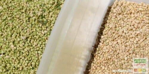 Sécher des graines de mâche