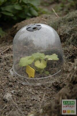 planter des courges sur le tas de compost