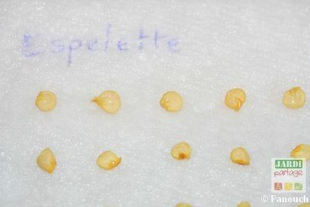 faire germer graines en interieur