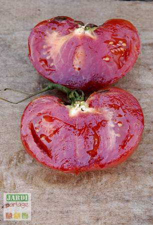 tomate portugaise interieur