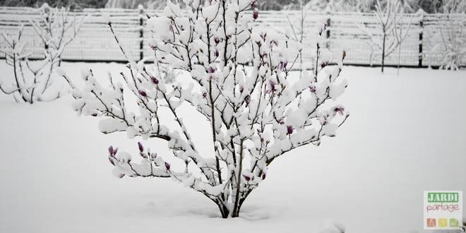 bienfaits neige au jardin