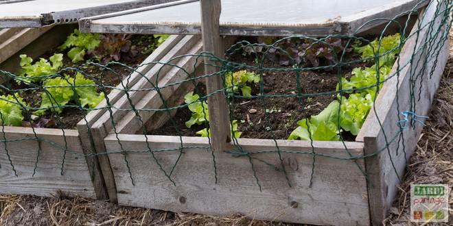 Semer sur couche chaude comment faire jardipartage - Quoi planter en juillet ...