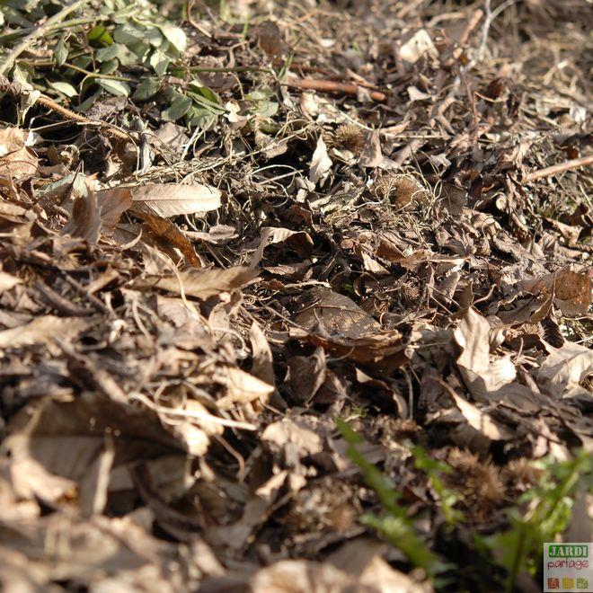 fabriquer son terreau de feuilles