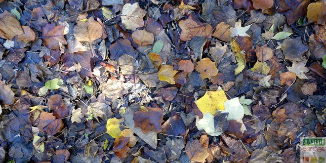 faire du terreau de feuilles