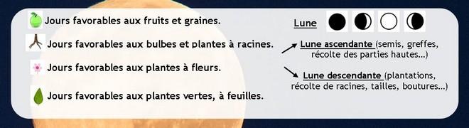 Comprendre le calendrier lunaire du jardinage