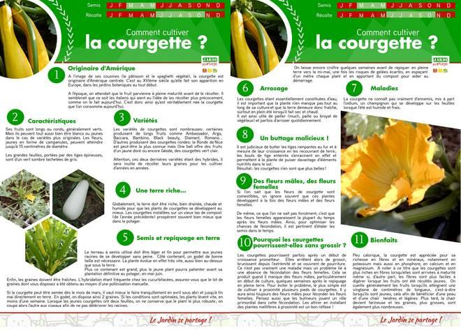 Culture courgette 5 astuces pour de belles courgettes jardipartage - Culture de la courgette ...