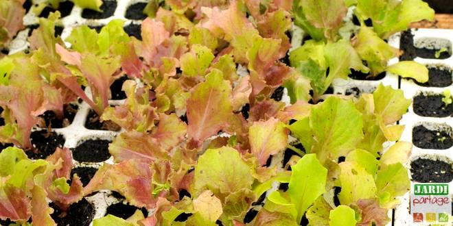 Calendrier Semi.Calendrier Des Semis 30 Legumes A Semer Jardipartage