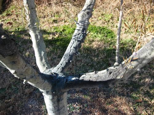 olivier mort