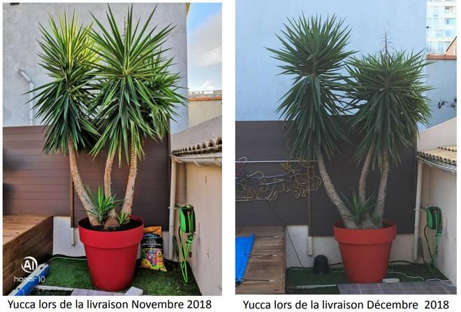 Le Yucca Gloriosa Se Plait En Exterieur Jardipartage