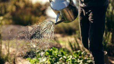 faut-il arroser les plantes en hiver