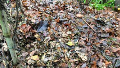 couvrir le sol du potager en hiver