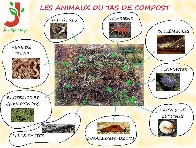 Habitants du compost