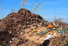 insectes compost