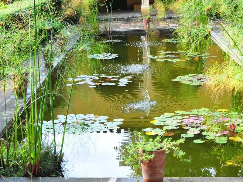 Nettoyer un bassin de jardin sans le vider   Jardipartage