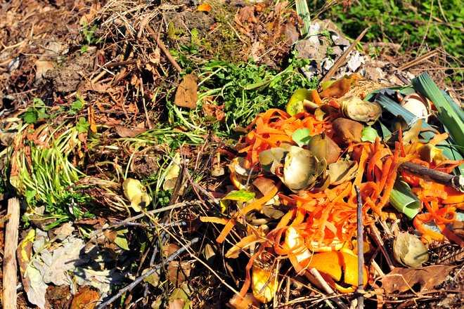 que mettre dans le compost bio