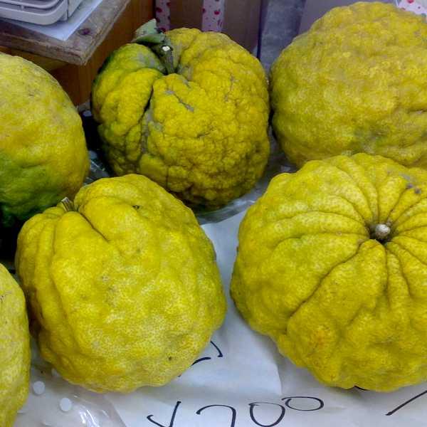 citron du japon oni yuzu