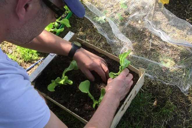 video planter des salades dans une jardiniere