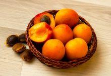 faire germer un noyau d abricot