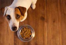 choisir croquettes chien