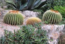 faire une rocaille de plantes grasses